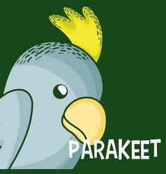 cute parakeet cartoon vector image