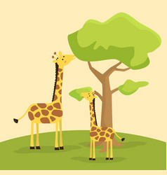 giraffes eating together cartoon vector image