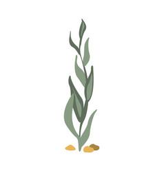 Sea floor seagrass part of mediterranean sea vector
