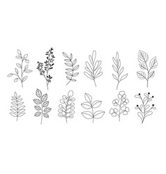 set branches leaves twigs vector image