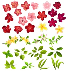 collection of different flowers and leaves vector image vector image