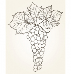grape outline vector image vector image