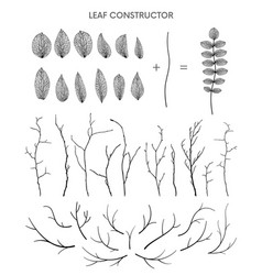 Branch and leaf fall spring summer detailed vector