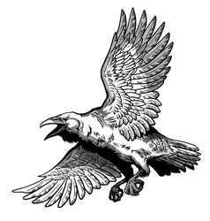 Flying common raven black and white vector