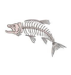 King salmon skeleton drawing vector