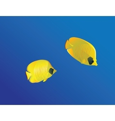Masced Butterfly fish vector image