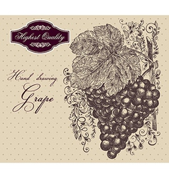Vintage Grapes vector
