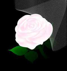 Abstract white rose and veil vector