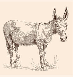 Donkey in grass vector