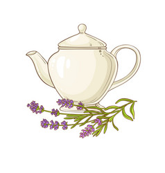 lavender tea vector image