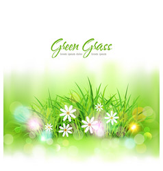 background with green grass and daisies element vector image vector image