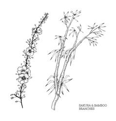 Hand drawn set of sakura and bamboo vector image vector image