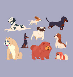 cartoon dogs puppy pet different breeds chow vector image