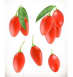 Goji berry 3d icons set Realistic vector