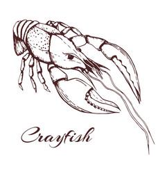 Hand drawn vintage crayfish vector