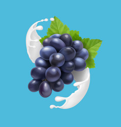 Juicy grapes in milk ot yogurt splash vector