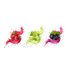 splash juice cranberry gooseberry black currant vector image