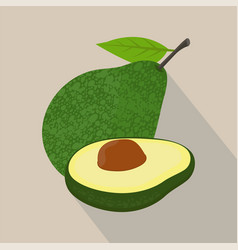 avocado isolated flat style vector image vector image