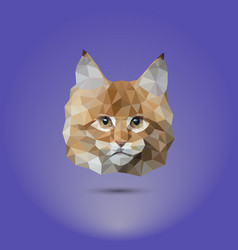 low-poly cat the head of a mane coone suitable vector image