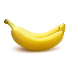 Bunch bananas isolated on white background vector