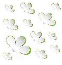 camomiles white background vector image