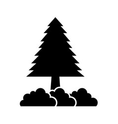 pine tree forest natural flora image vector image
