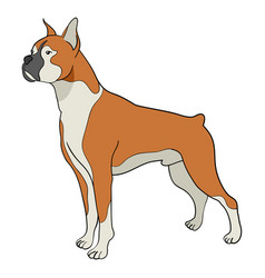 Cartoon of boxer dog vector