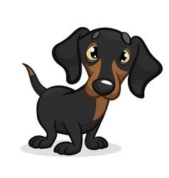 cartoon of cute dachshund vector image vector image