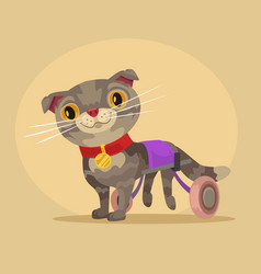 disabled cat character in wheelchair vector image