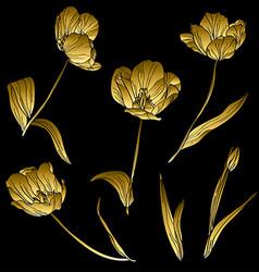 golden tulips set vector image vector image