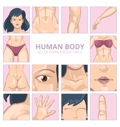 Female body parts in cartoon style icons vector