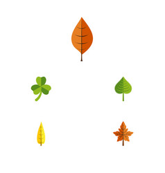 Flat icon leaf set of hickory foliage alder and vector