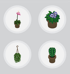 Isometric plant set of flowerpot blossom peyote vector
