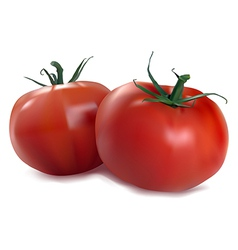 two red tomatoes vector image