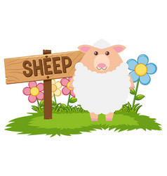 white sheep in the farm vector image