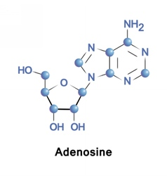 Adenosine is a purine nucleoside vector image vector image