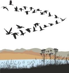 Migrating wild geese over autumn landscape vector image vector image