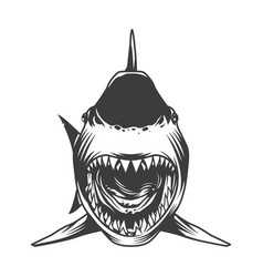 angry shark front view template vector image