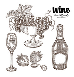 hand drawn bottle champagne with grape and wine vector image