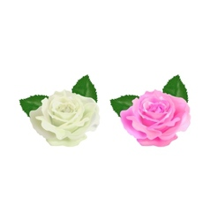 realistic rose on a white background vector image