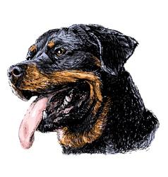 Rottweiler vector image