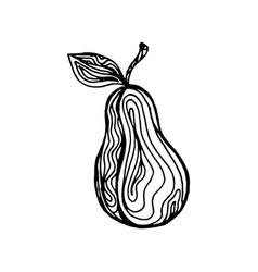 pear ink sketch vector image