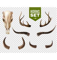 Cow skull and horns set vector
