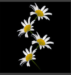 Daisies on a black square background - a pattern vector