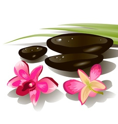 Hot Stone and Flower Design vector