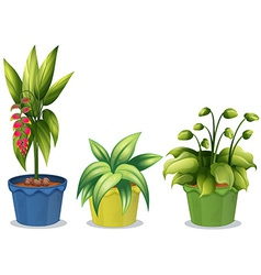 Potted plant vector