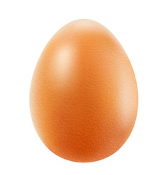 realistic brown egg vector image