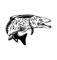 spotted speckled trout fish jumping vector image vector image
