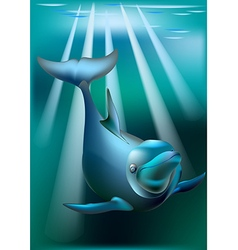 Delfin and rays of sunny vector