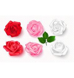 set rose buds on a transparent background 3d vector image